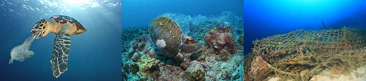 海で暮らす生き物たち